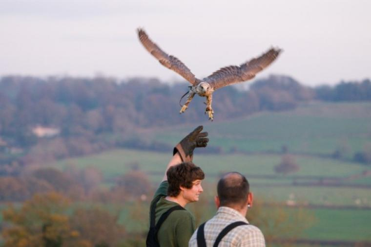 Try your hand a falconry in the grounds