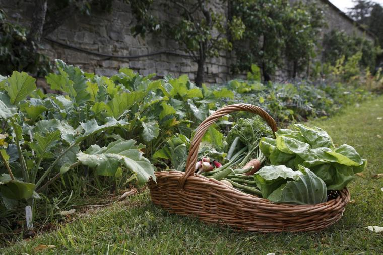 Fresh Vegetables from the Walled Garden in season